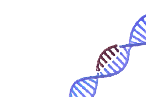 Ethics & Policy Issues in CRISPR Gene Editing
